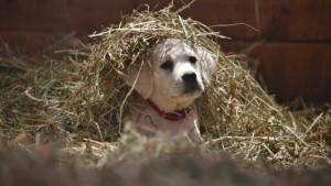 635580381036184901-a-b-super-bowl-ads-budweiser-lost-dog-ad-still-5